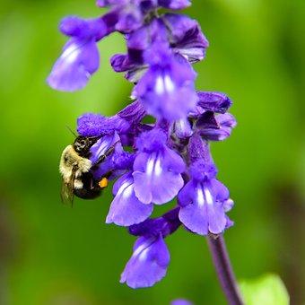 Flower, Nature, Garden, Bourdon, Summer, Violet