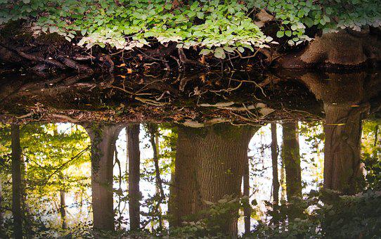 Mirroring, Forest, Water, River, Trees, Mood
