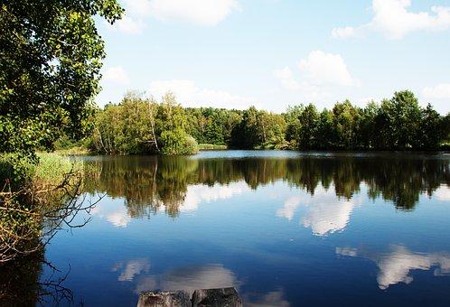Pond, Water, Mirroring, Pond Plant