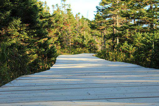 Wooden Path, Wooden Track, Away, Forest, Trees