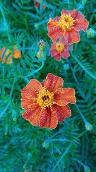 Green, Orange, Flowers, At Araku, Andhra Pradesh, India