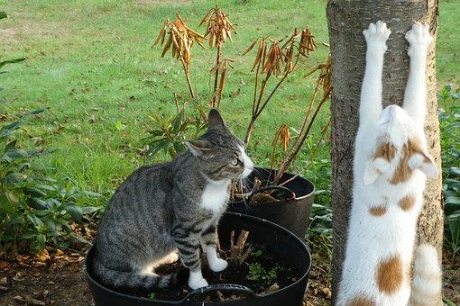 Cat, Cats, Katten, Pet, Animal, Domestic Cat, Nature