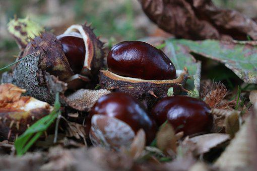 Chestnut, Autumn, Nature, Prickly, Autumn Fruit