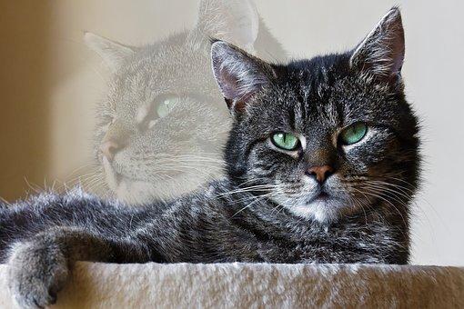 Animals, Mammal, Animal World, Animal Portrait, Cat