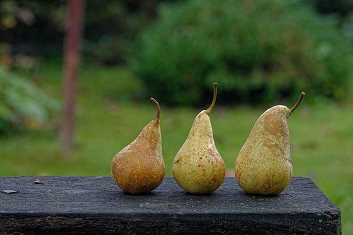 Autumn, Pear, Pears, Collections, Fruit, In The Fall