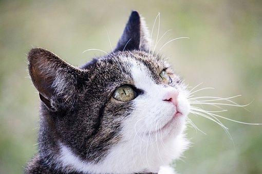 Cat, Domestic Cat, Mammal, Animal, Animal World