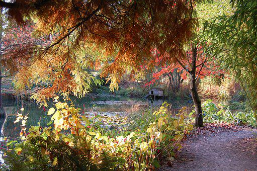 Autumn, Fall, Leaves, Nature, Pond, Tree, Colourful
