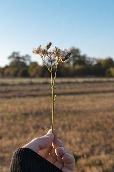 Hand, Plant, Nature, Landscape, Bonn, Field, Sky