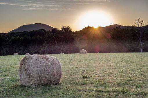 Field, Fields, Prairie, Hill, Agriculture, Rural