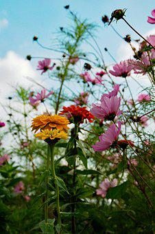 Flowers, Nature, Wanted, Autumn, Colorful, Beauty