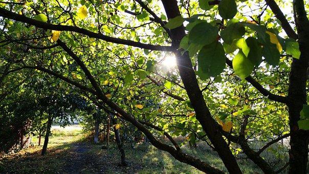Fall, Foliage, Path, Autumn