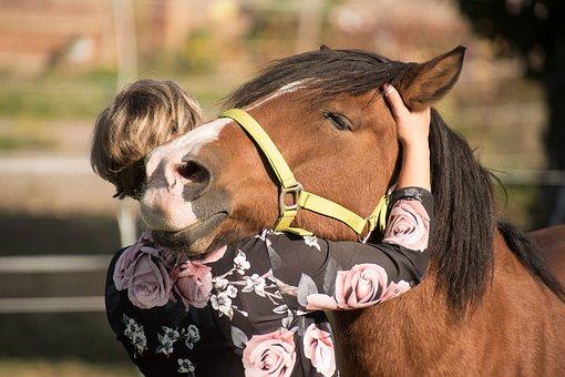 Horse, Animal, Friendship, Woman, Embrace, Love