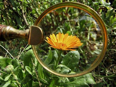 Magnifying Glass, Flower, Orange, Marigold, Garden