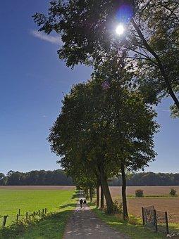 Autumn Walk, Lane, Landscape, Nature, Fields, Green