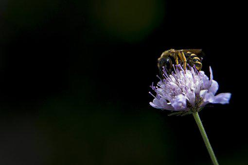 Bee, Flower, Nature, Insects, Pollen, Nectar