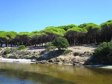 Pine Forest, Budoni, Beach, Sardinia, Italy, Sea