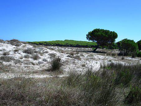 Dune Landscape, The Beach Of Budoni, Sardinia, Italy