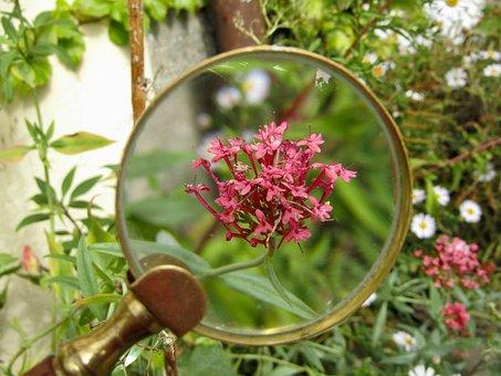 Magnifying Glass, Flower, Macro, Zoom, Garden