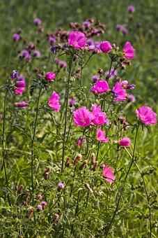 Wild Flowers, Meadow, Summer, Flowers, Pink, Bright