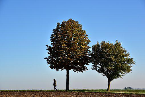 Alone, Walk, Trees, Nature, Landscape, Pedestrian