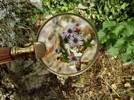 Magnifying Glass, Flowers, Plants, Garden, Petals