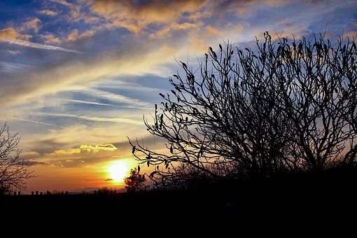 Sunset, Tree, In The Evening, The Sky, Romantic, Branch
