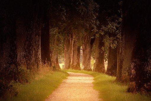 Light, Forest, Away, Path, Trees, Autumn, Orange