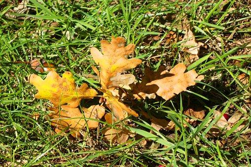 Autumn Leaf, Autumn, Colorful, Fall, Color
