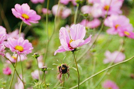 Flowers Field, Pink, Flowers, Bloom, Nature, Field