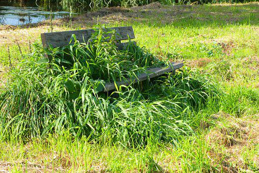 Weeds, Overgrow, Bank, Body Kits, Sit, Hiking, Rest