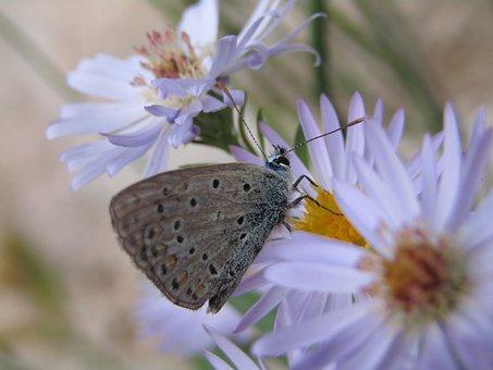 Azure, Butterfly, Blue, Grey, Flowers, Garden, Macro