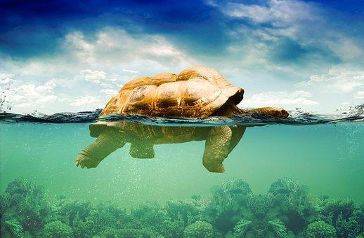Image, Under Water Manipulation, Underwater, Clouds