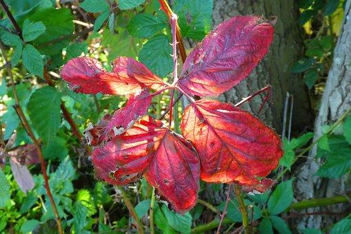 Autumn Leaf, Fall Colors, Autumn, Leaves, Sheet, Colors