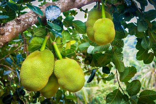 Jackfruit, Green, Fruit, Delicious, Food, Exotic