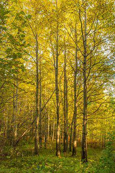 Forest, Autumn, In The Fall Of, Leaves, Forests, Mystic