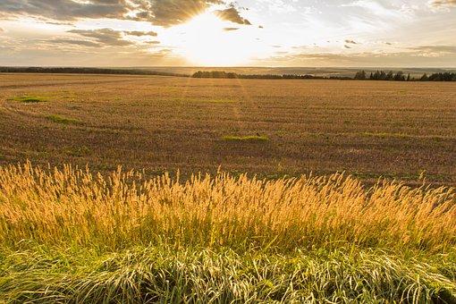Grass, Sun, Sunset, Landscape, Horizon, Herbs