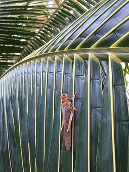 Mexico, Locust, Leaf