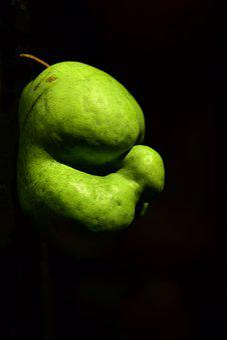 Pear, Fruit, Crippled, Misshapen, Head, Old, Kautz