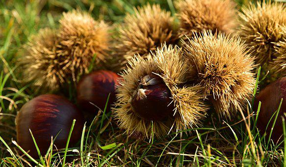 Chestnut, Autumn, Fruit, Nature, Autumn Fruit, Prickly