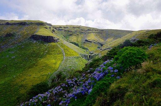 Azores, Hydrangeas, Mountain, Pasture, Landscape