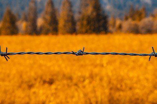 Barbed Wire, Wire, Sting, Prickly, Metal, Fence
