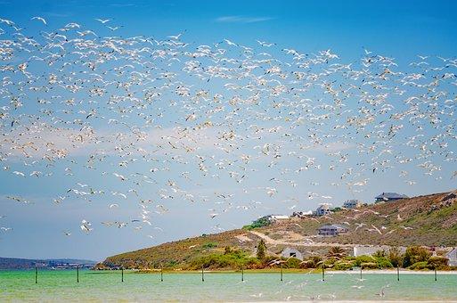 Flock, Wildlife, Birds, Flying, Outdoors, Sky, Scene