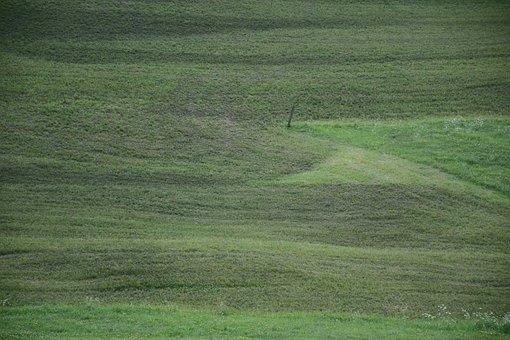 Prato, Grass, South Tyrol, Velvet, Green