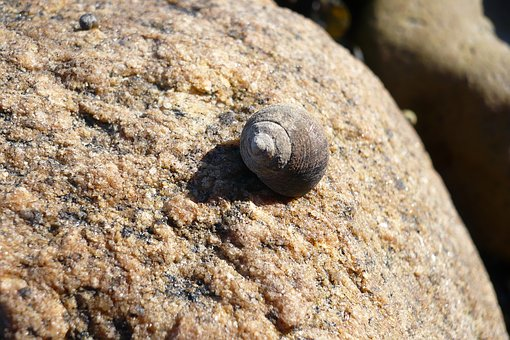 Shell, Snail, Simply, Beach, Casing, Summer, Close Up