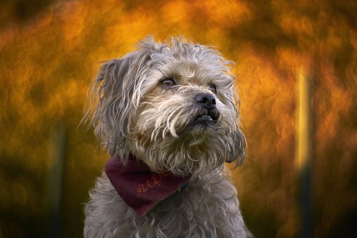 Alfredo, Petzval, Bokeh, Swirly Bokeh, Swirly, Dog