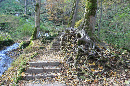 Nature, Forest, Path, Away, Trail, Forest Path, Stairs