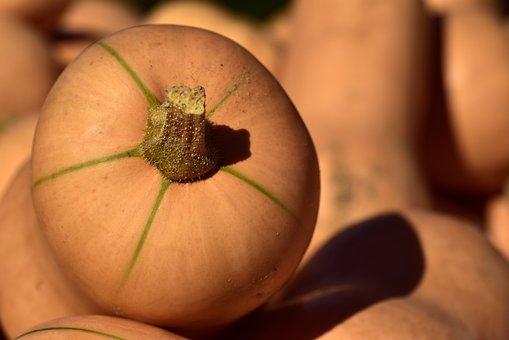 Pumpkin, Butternut, Vegetables, Food, Orange, Fruit