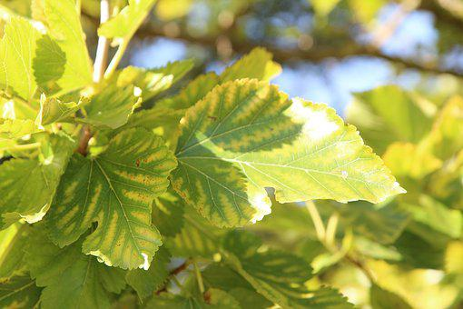 Vine, Vine Leaf, Viticulture, Wine Of The South