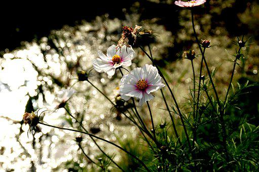 Flowers, Ditch, White, Green, Sun, Sunlight, Nature