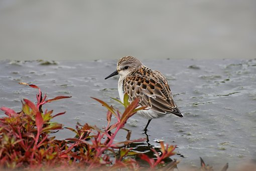 Animal, River, Waterside, Bird, Wild Birds, 旅鳥